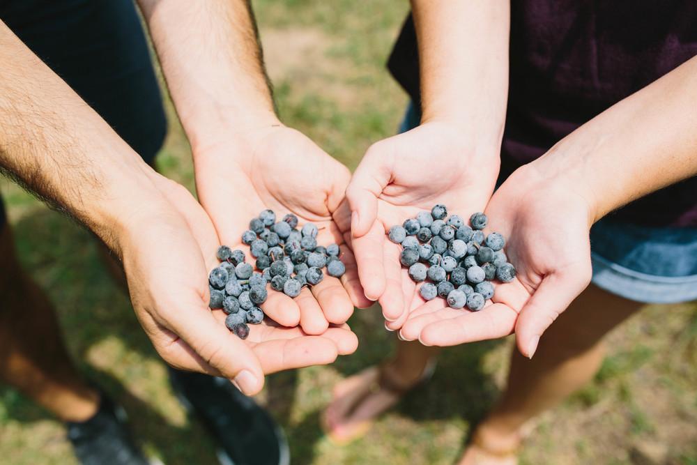 berries-3.jpg