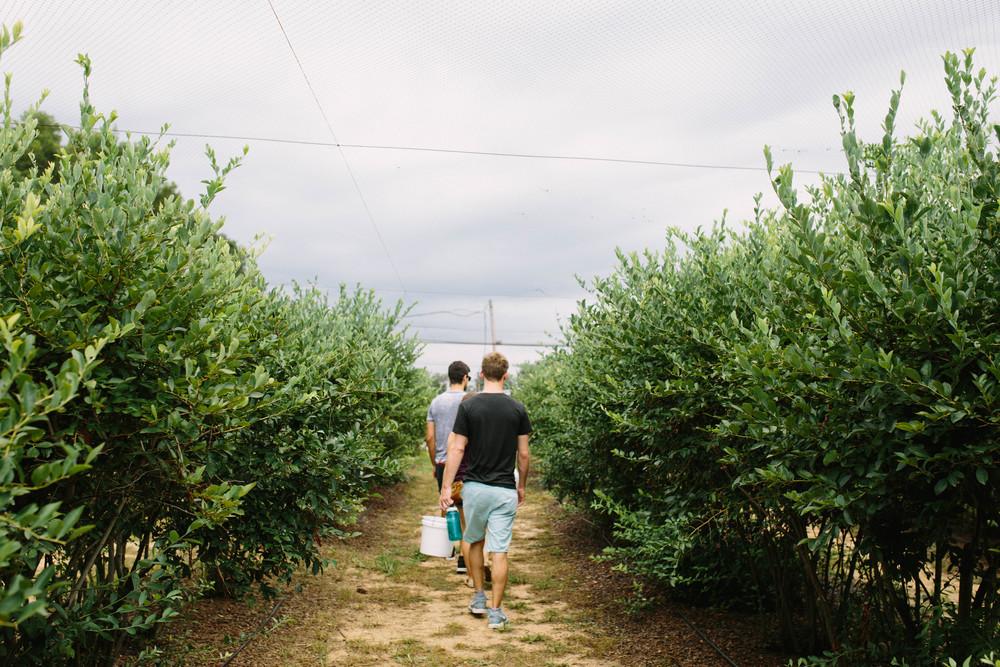 berries-10.jpg