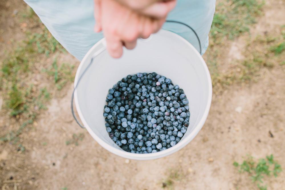 berries-23.jpg