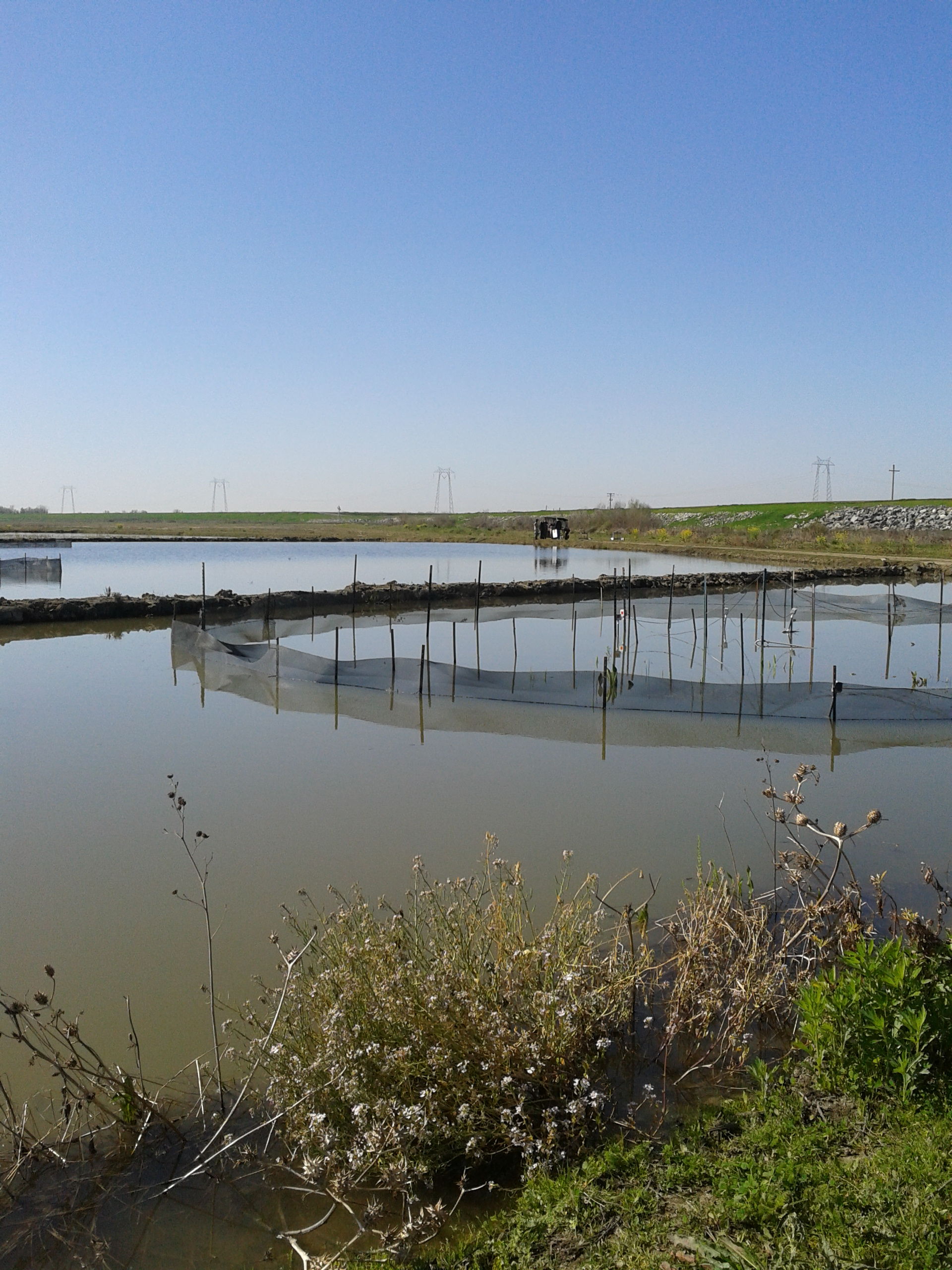 Surrogate wetlands, aka rice fields, provide seasonal floodplain for fish