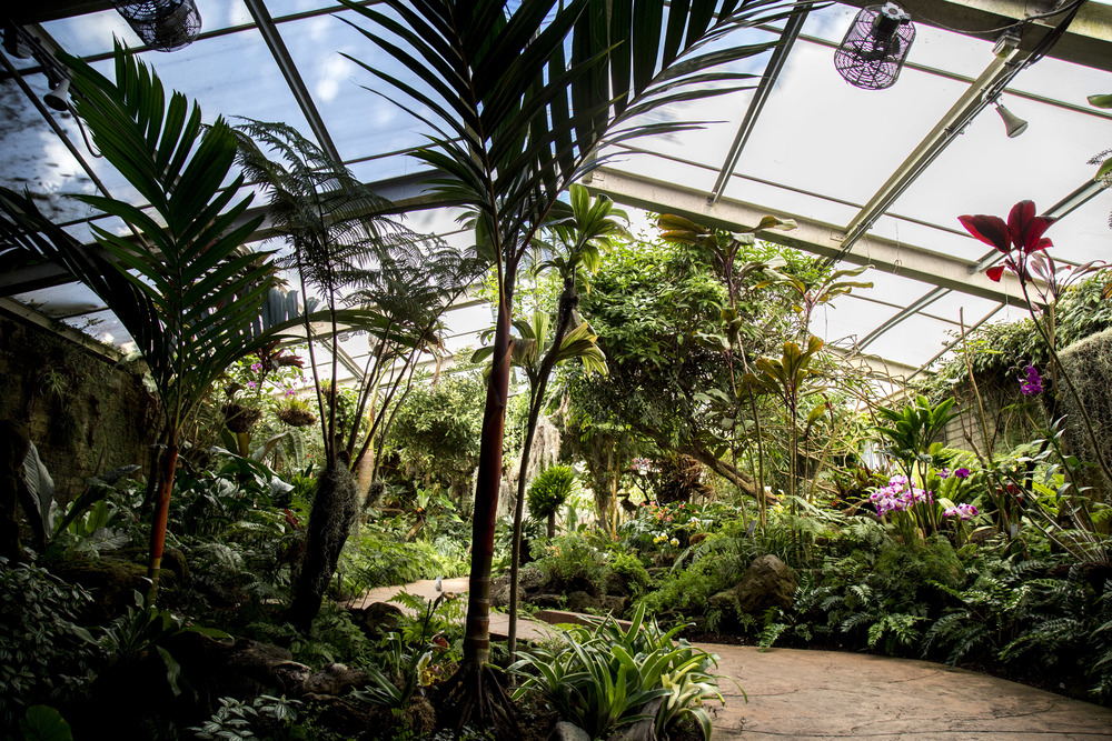 interior of the Tropical Greenhouse