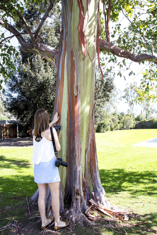 Abby touching the Rainbow Eucalyptus
