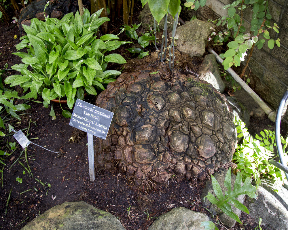 looks like a turtle shell :)