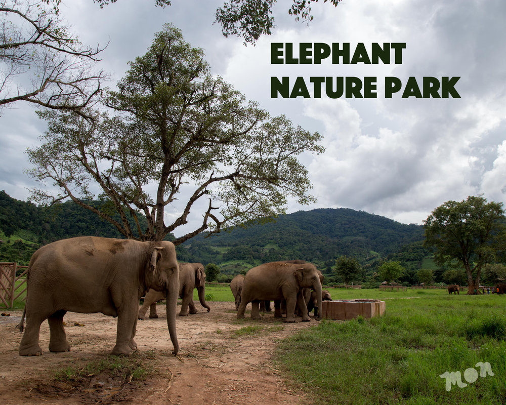 Away from LA: Elephant Nature Park, Chiang Mai — The ...