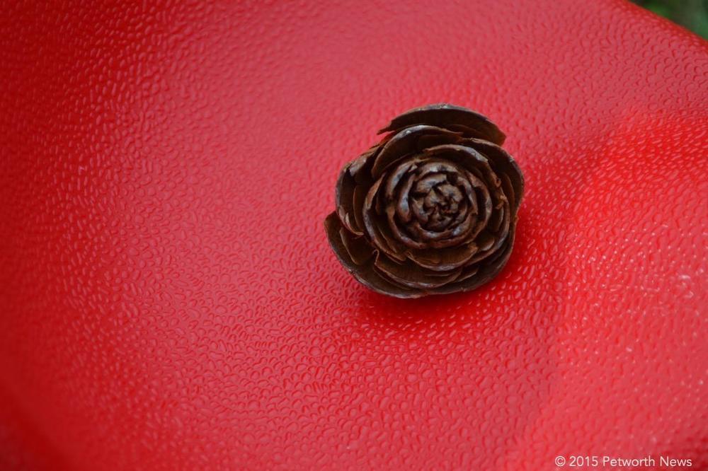 Pine cone rose...