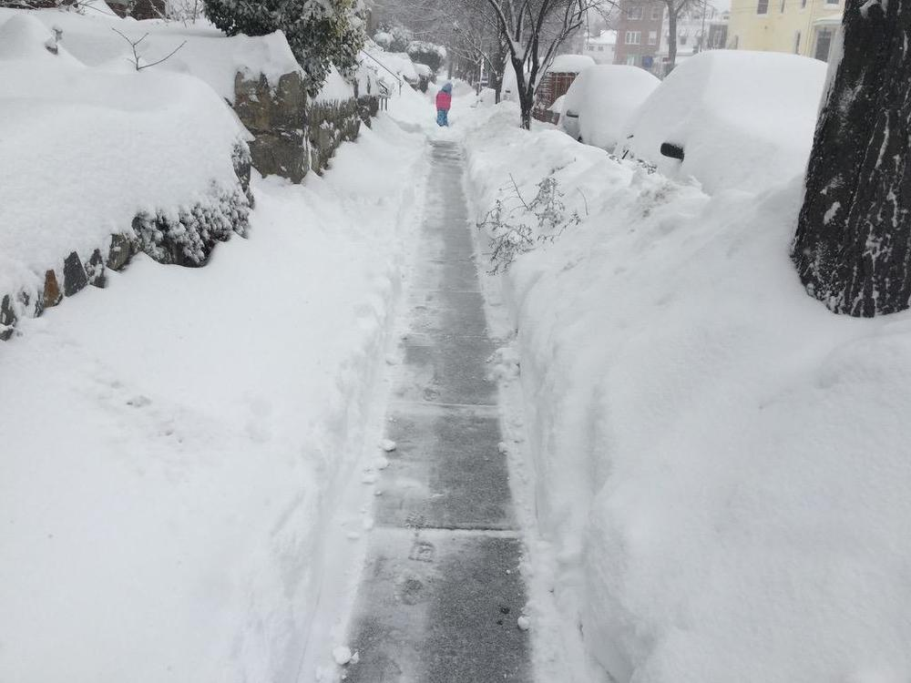 The seemingly never-ending struggle for a clean sidewalk  (photo: Carol Herwig) .