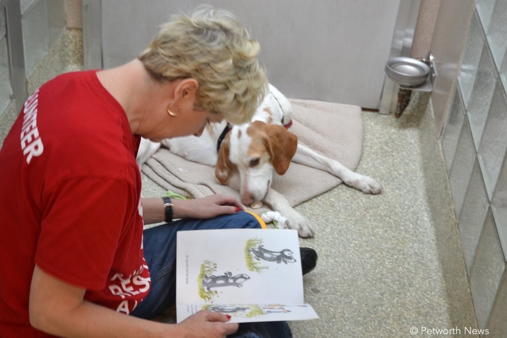 Volunteers read books to dogs awaiting adoption, giving them needed love and time with people.