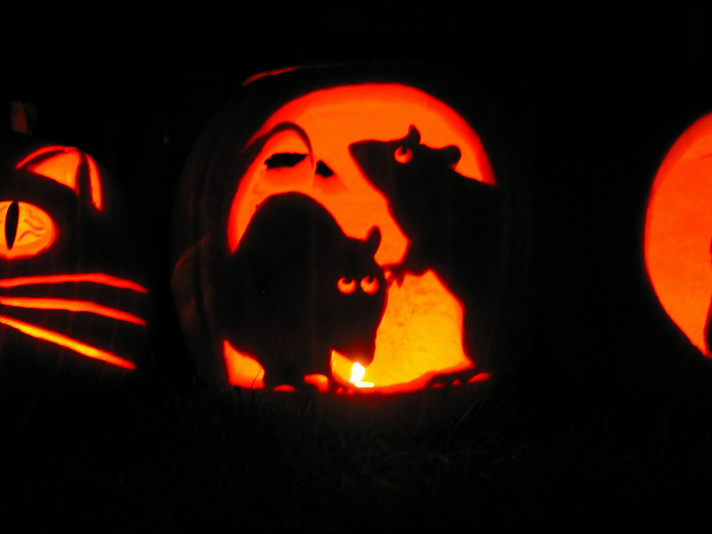 It's not just on Halloween that rats can be scary. (photo:  Peter Kaminski )