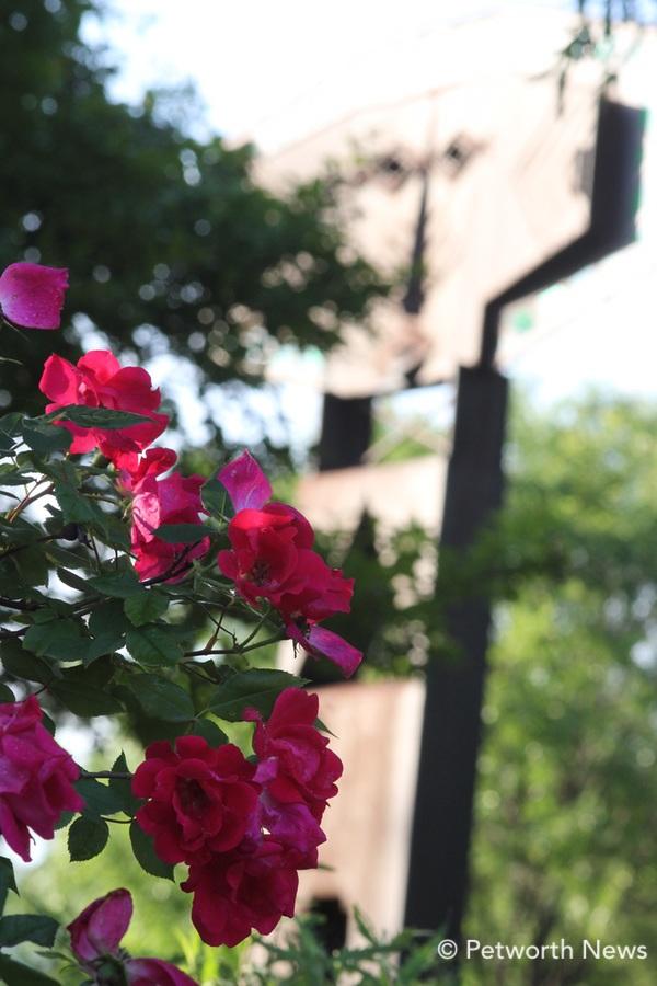 mayflowers8.jpg