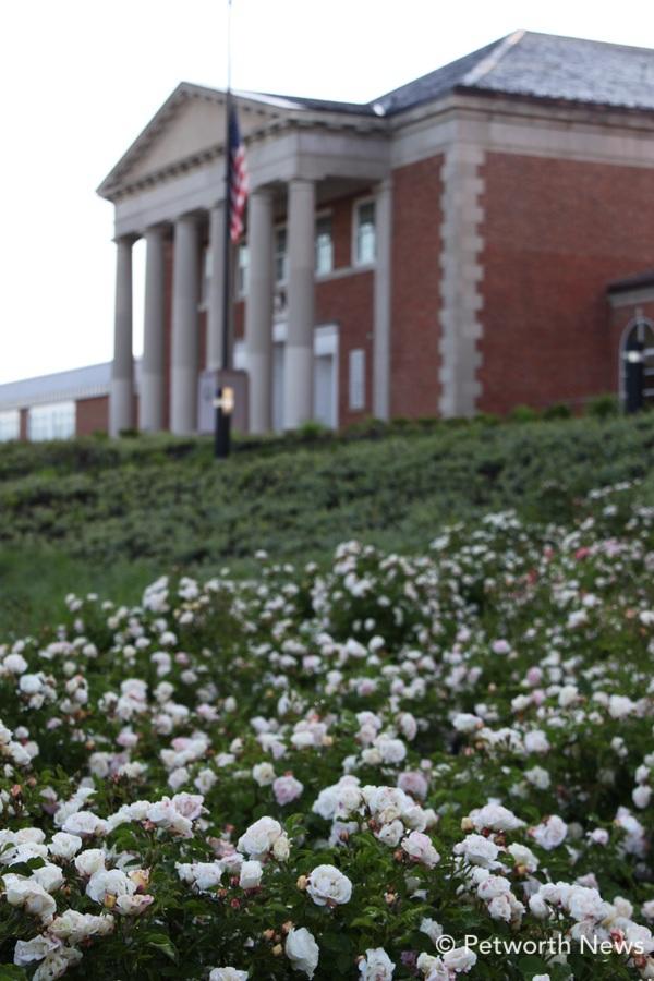 mayflowers9.jpg