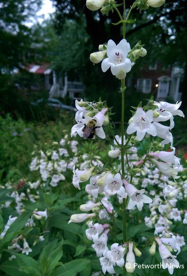 mayflowers7.jpg