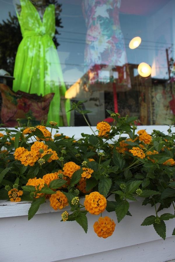 A short-growing, yellow lantana in the window box outside Fia's Fabulous Finds