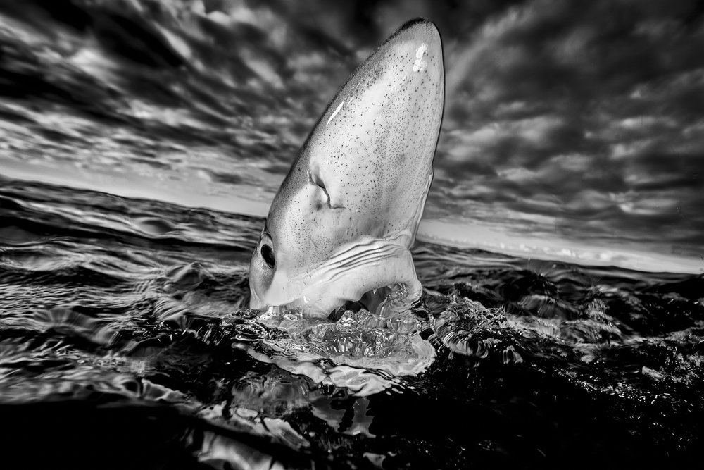 Image by Richard Robinson - Wildlife category winner,   New Zealand Geographic Photographer of the Year 2015