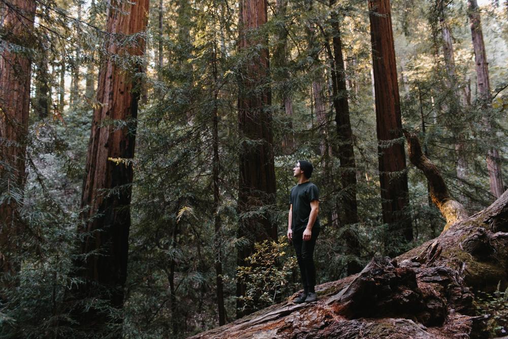 Isaac // Muir Woods