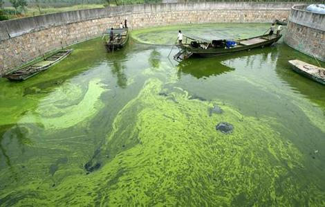 Algal bloom (theage.com.au)
