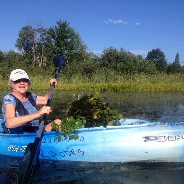 Carolyn Rhodes, not Jesse, gathers water chestnut (vtwatershedblog.com)