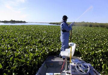 Spraying herbicides on water hyacinth in California | Photo: California State Parks Division of Boating and Waterways