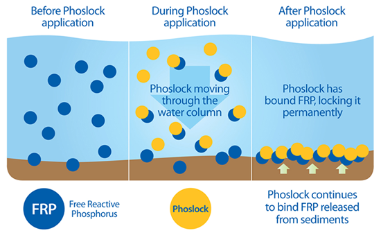 A chart displaying what happens before, during, and after a Phoslock application in a phosphorus-heavy water body.