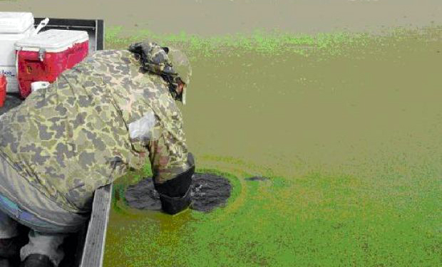 A Wisconsin Department of Natural Resources scientist collects water quality data to better understand nutrients' role in the overabundance of duckweed and algae.   Too much nitrogen and phosphorus in water could lead to an overgrowth of free-floating plants such as duckweed and filamentous algae. This overgrowth can result in dense layers of scum on the surface of the waters, and can damage below-surface plants, fish and other lake organisms by depriving them of the oxygen and sunlight they need to survive.