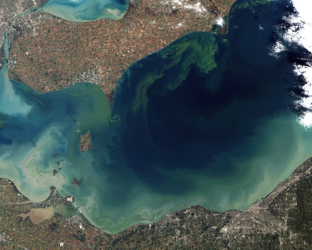 Satellite image of a 2011 Lake Erie algal bloom (wikipedia.org).