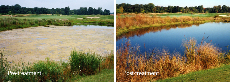 Pre-treatment and post-treatment images of a water body treated with AquaPro.