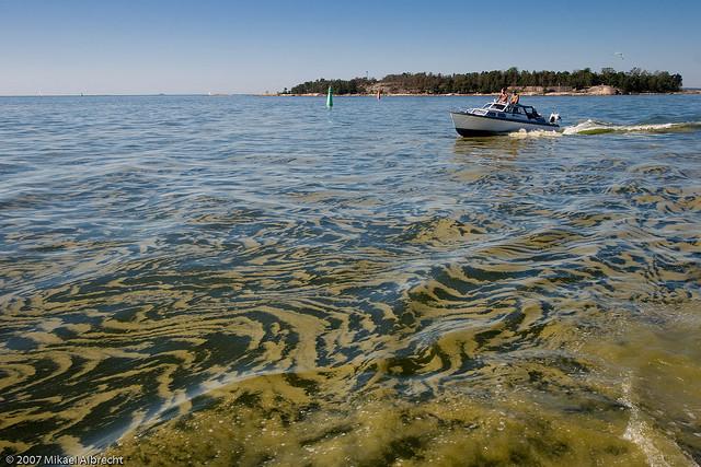 Algae in the baltic sea (image via greenfudge.org).