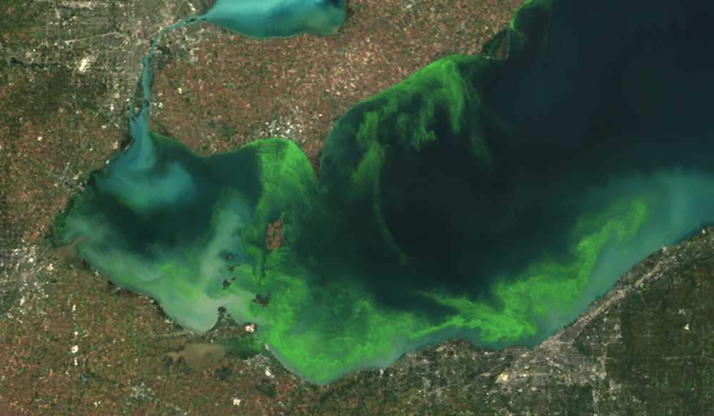 Lake Erie algal bloom (i.huffpost.com).