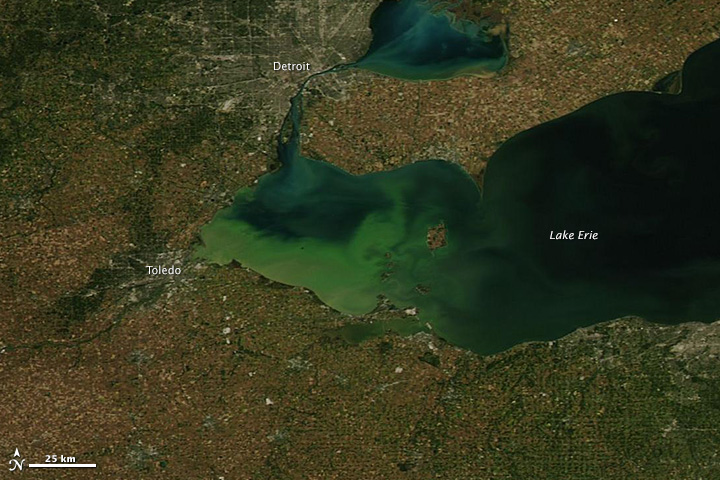 Lake Erie algal bloom (image via eoimages.gsfc.nasa.gov).