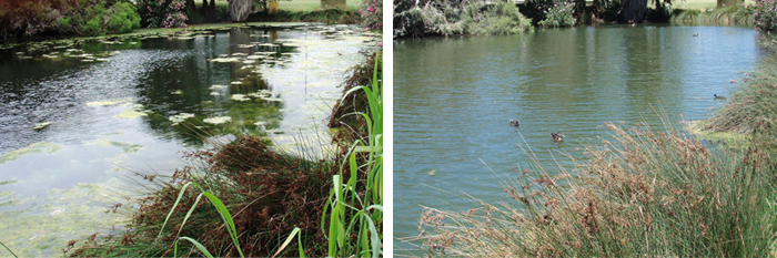 Before and after images of a pond treated with Phoslock