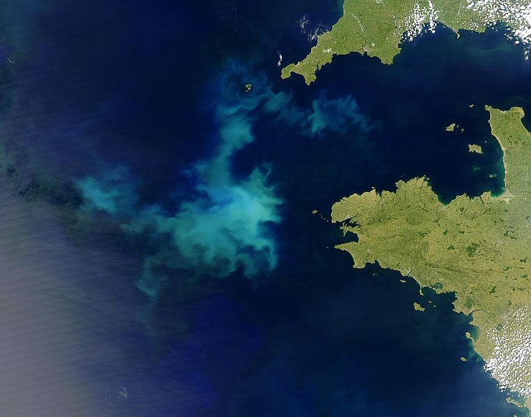 A 2004 algal bloom off the coast of France, also visible from space. Image credit: Jacques Descloitres, wikimedia.org