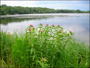 An image from the shore of McCarrons Lake. Credit: capitolregionwd.org