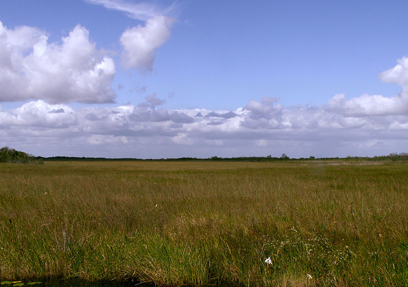 One of the Everglades' sawgrass prairies. Credit: Moni3, wikimedia.org