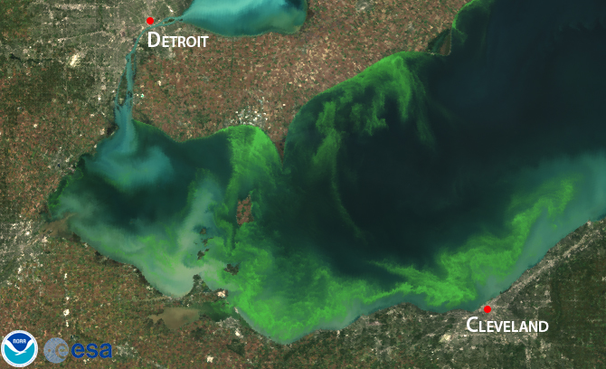 The 2011 Lake Erie algal bloom. Image credit: noaanews.noaa.gov