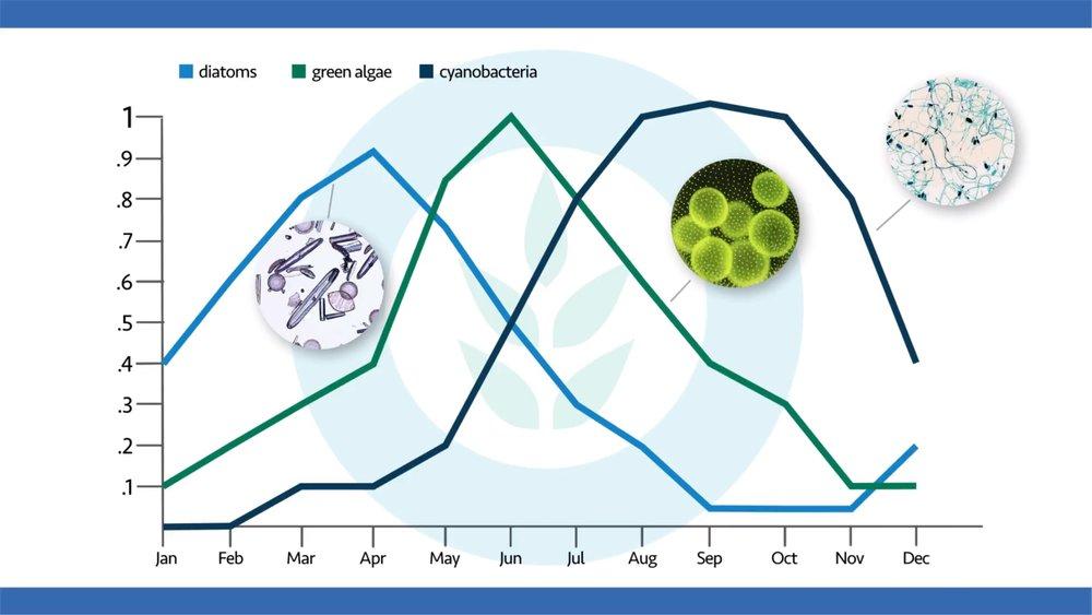 algae-seasonality.JPG