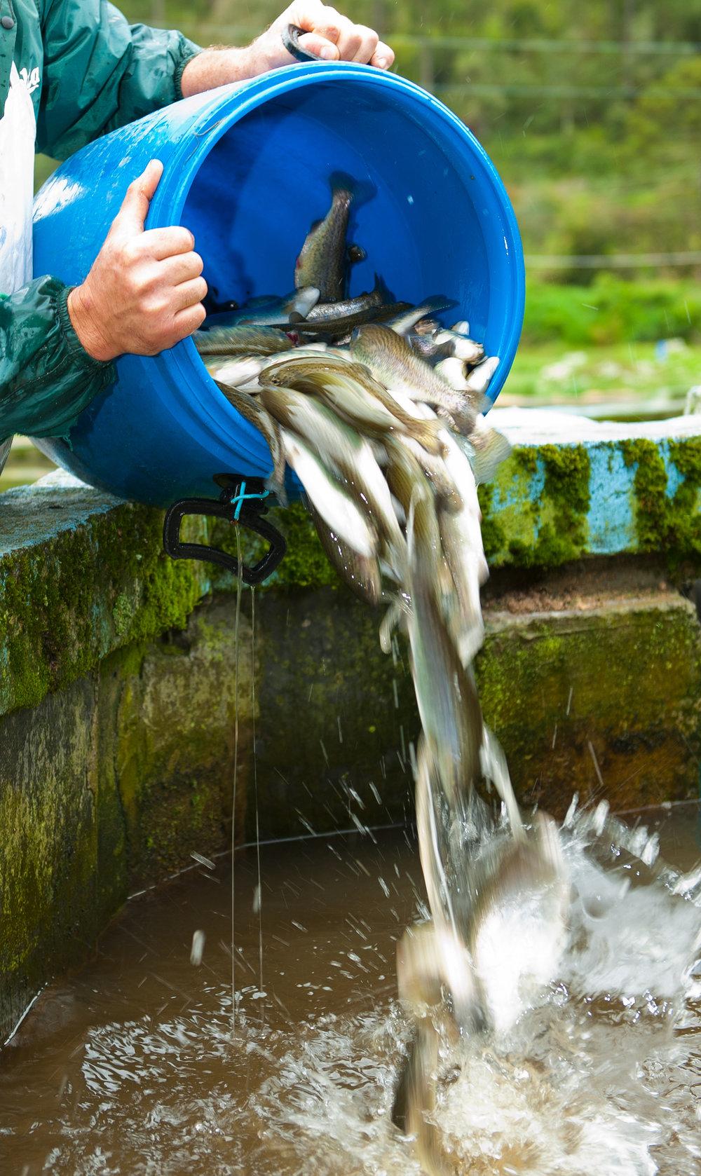 bait-buckets-algae-growth.jpg