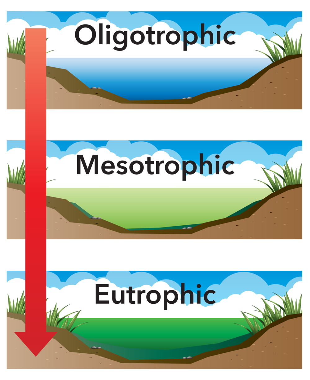 eutrophic-cycle-illustration.png