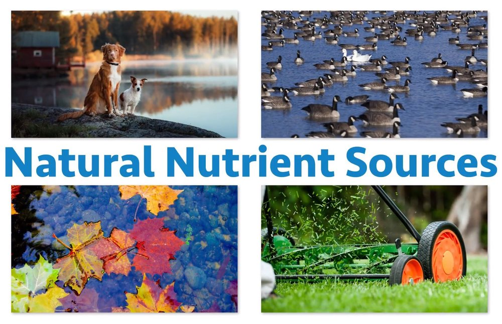 natural-nutrient-sources.JPG