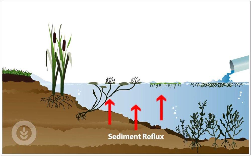 sediment-reflux.JPG