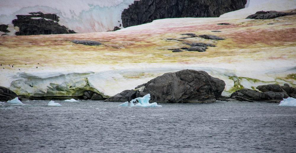 algae-snow-ice.jpg