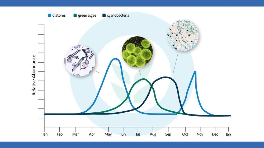 algae-relative-abundance-by-season.JPG