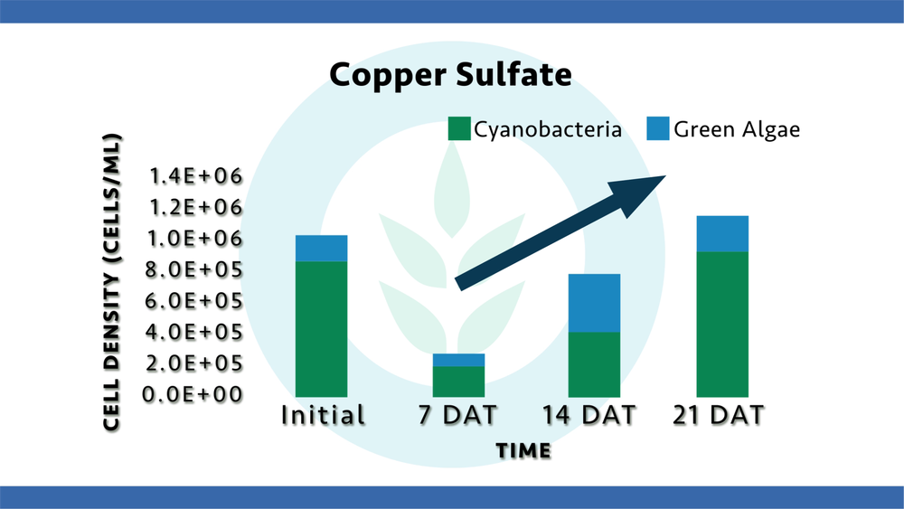 copper-sulfate-regrowth.png