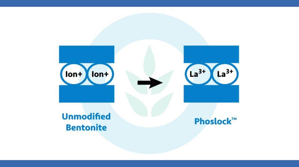 bentonite-lanthanum.JPG