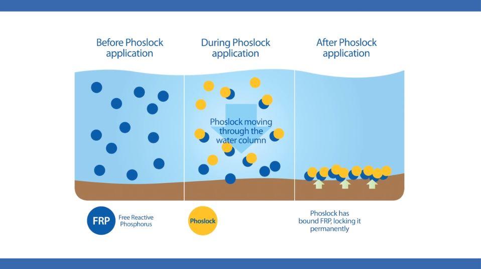 phoslock-process.JPG
