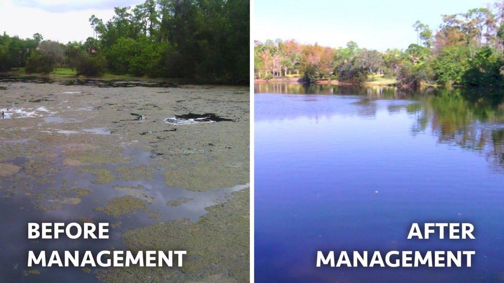 before-after-management-of-algae.JPG