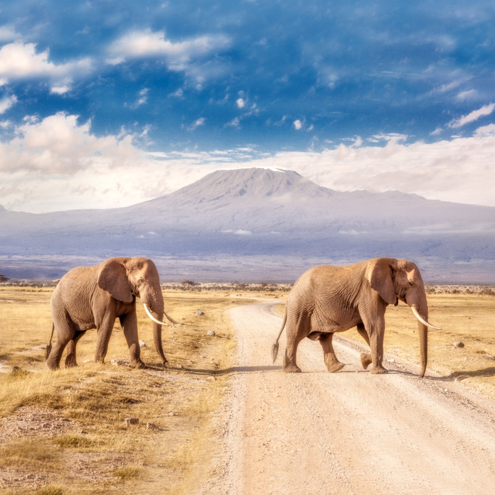 wn-srt18-ig-elephants-A1.jpg