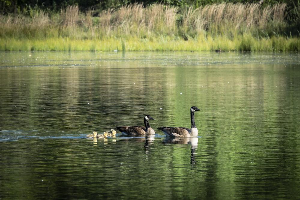 Birds of the River-1.jpg
