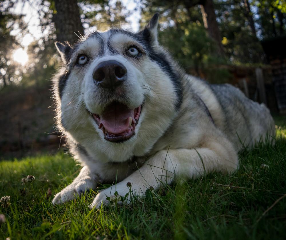 Silly Dog-1.jpg
