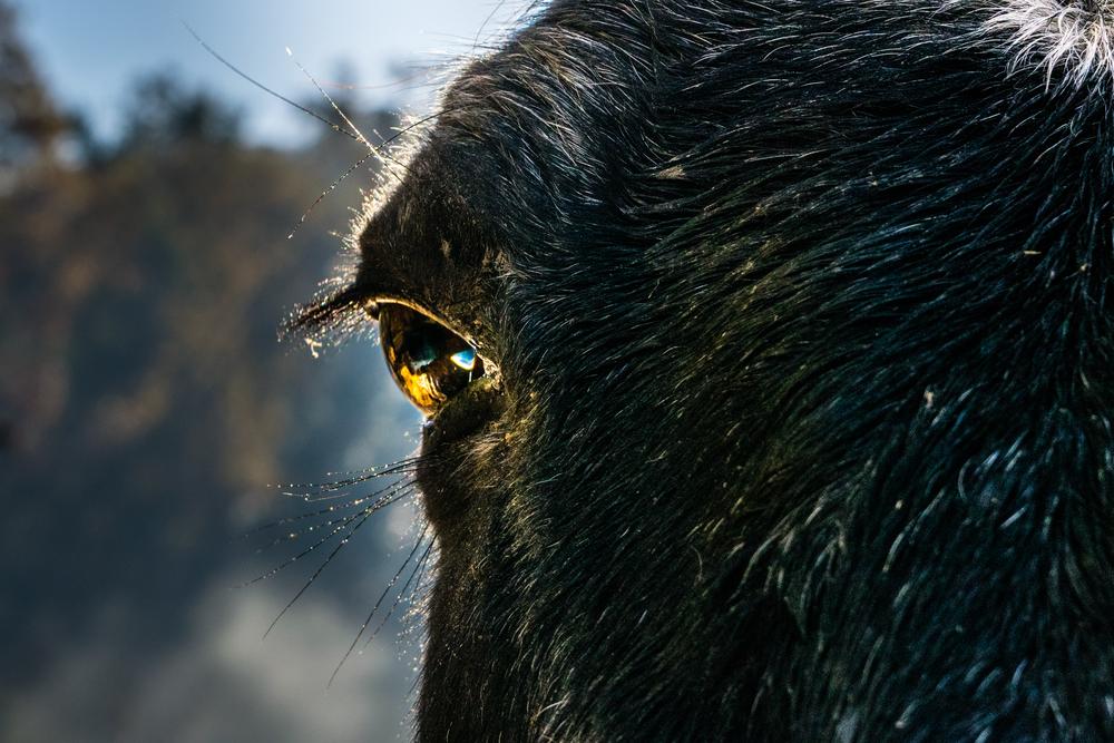 Eye of the Horse-1.jpg
