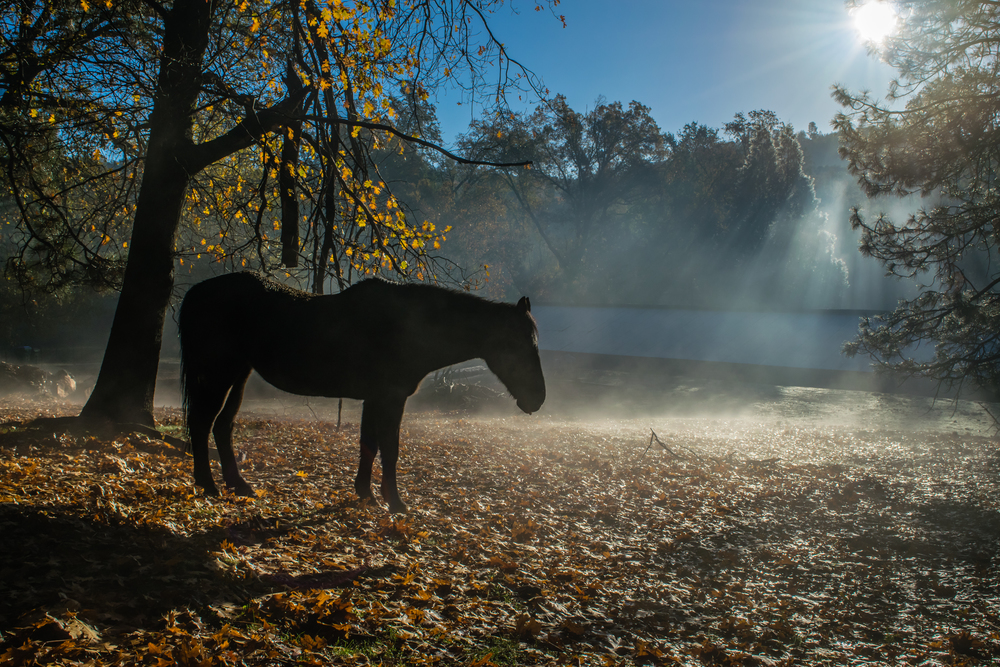 Misty Morning-1.jpg