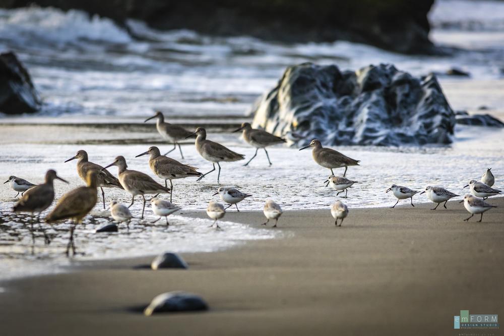 Beach Birds-1.jpg